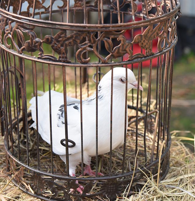 РЕПОРТАЖИ О ЖИВОТНЫХ ТО ЖЕ ИНТЕРЕСУЮТ НАШИХ ПОДПИСЧИКОВ. люди с большим удовольствием отслеживают дрессировку голубей или смотрят как выращивать элитные породы кур. Тысячи просмотров о выращивании быстрорастущего клариевого сома.